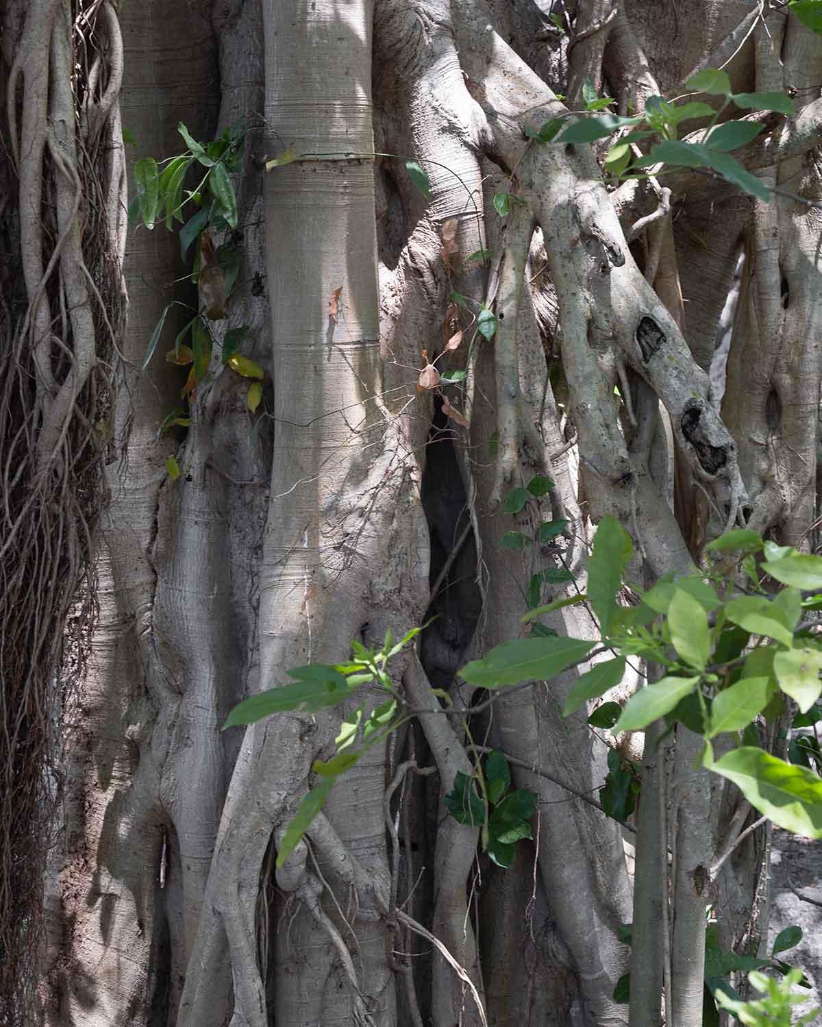 Álamo Cenote