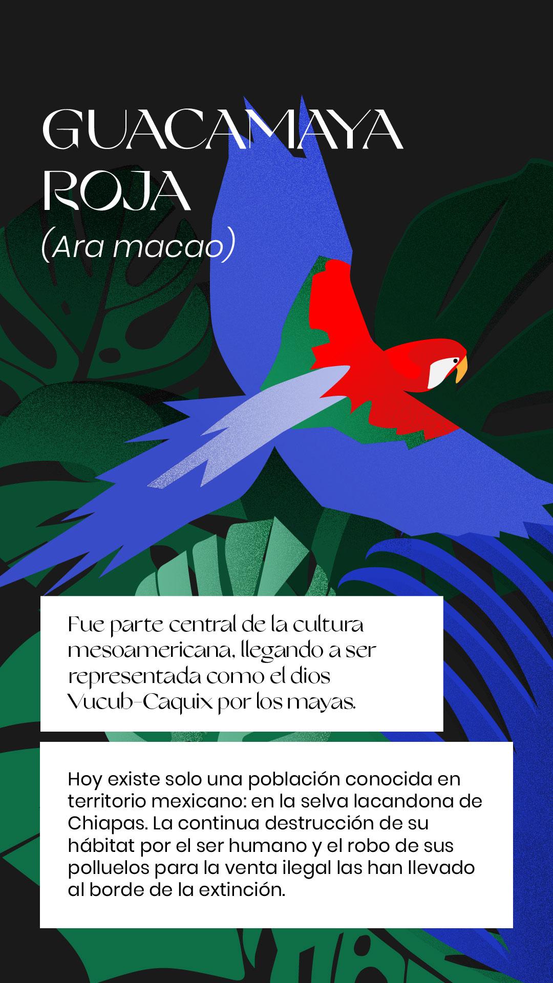 Guacamaya extinción