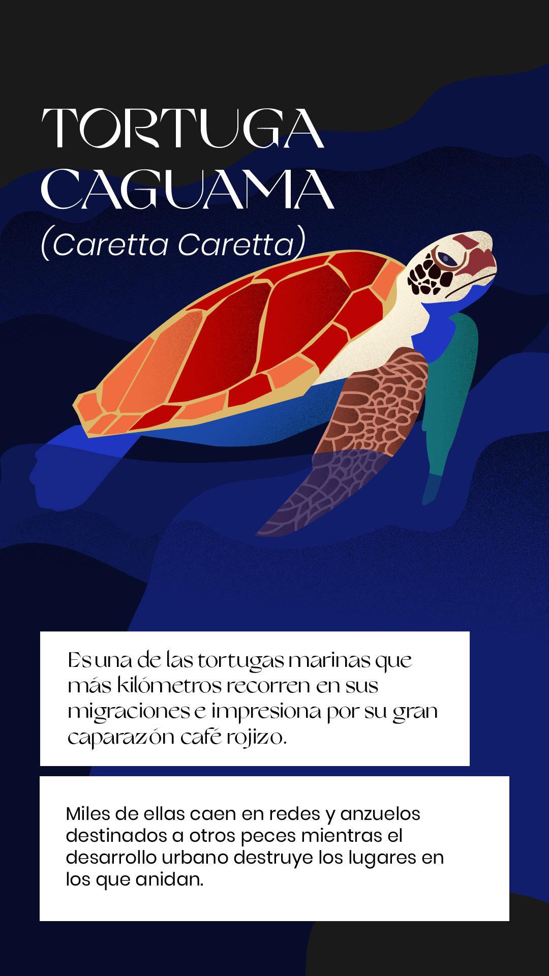 Tortuga caguama extinción