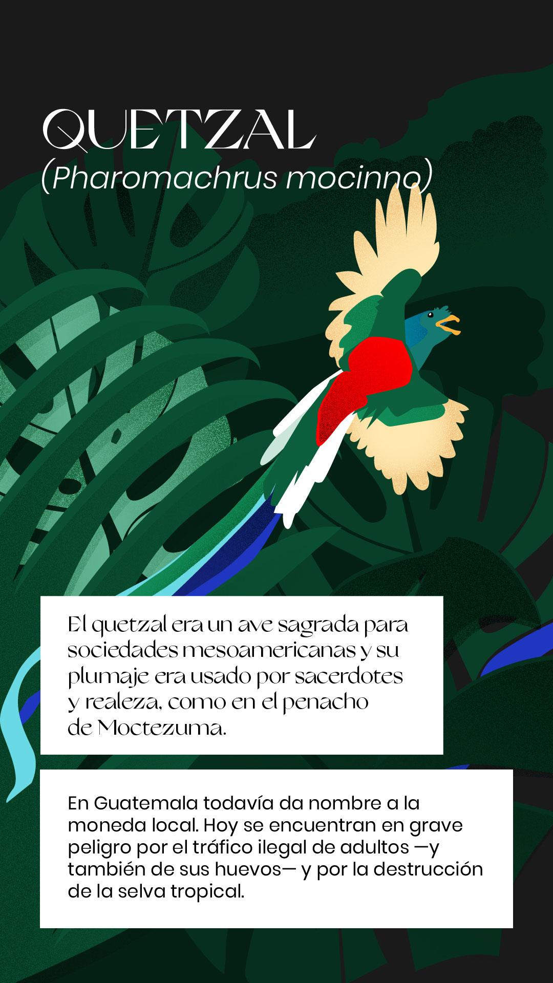 Quetzal extinción