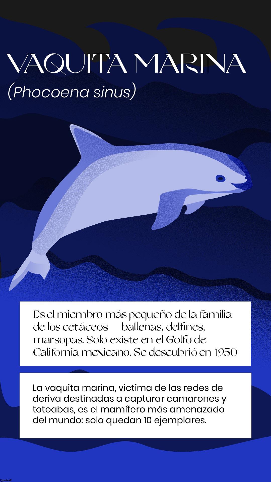 Vaquita extinción México