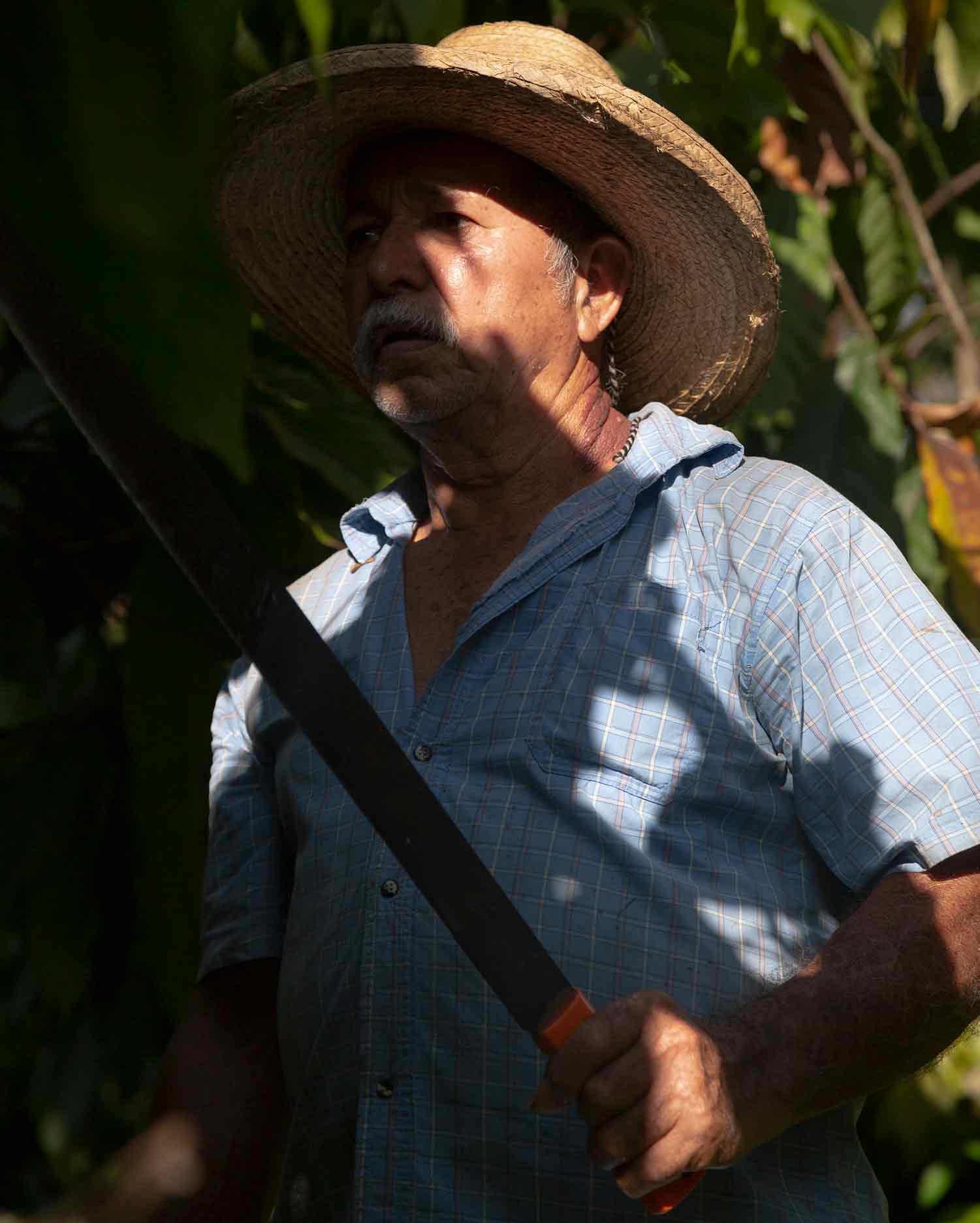 Guadalupe Pérez Tabasco Colapso Cacao