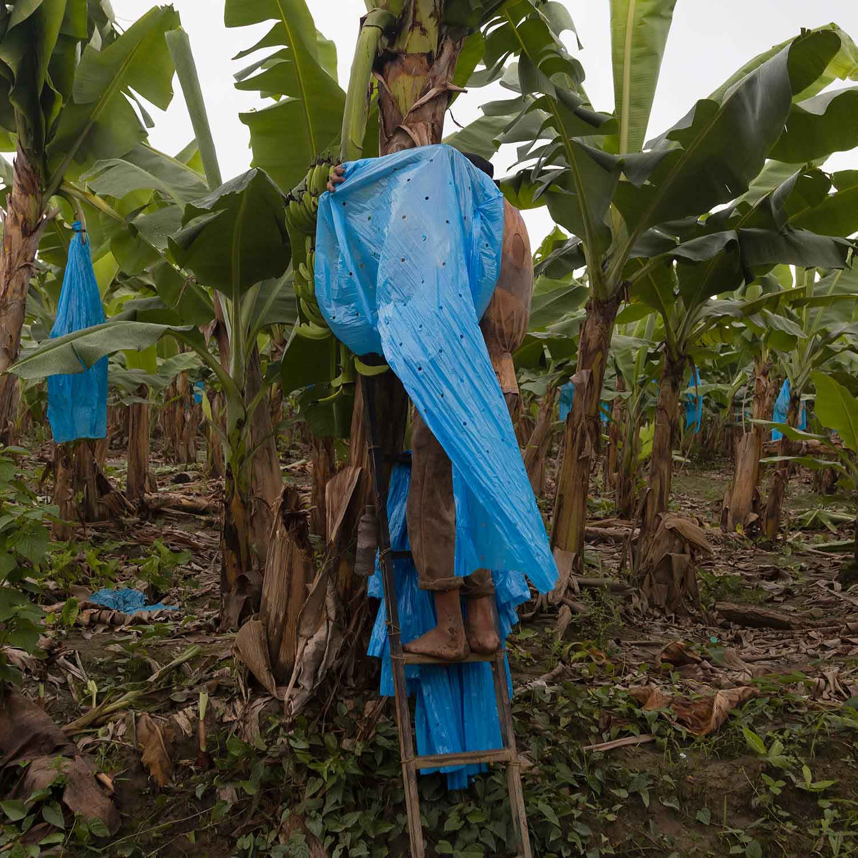 Agricultores de Teapa