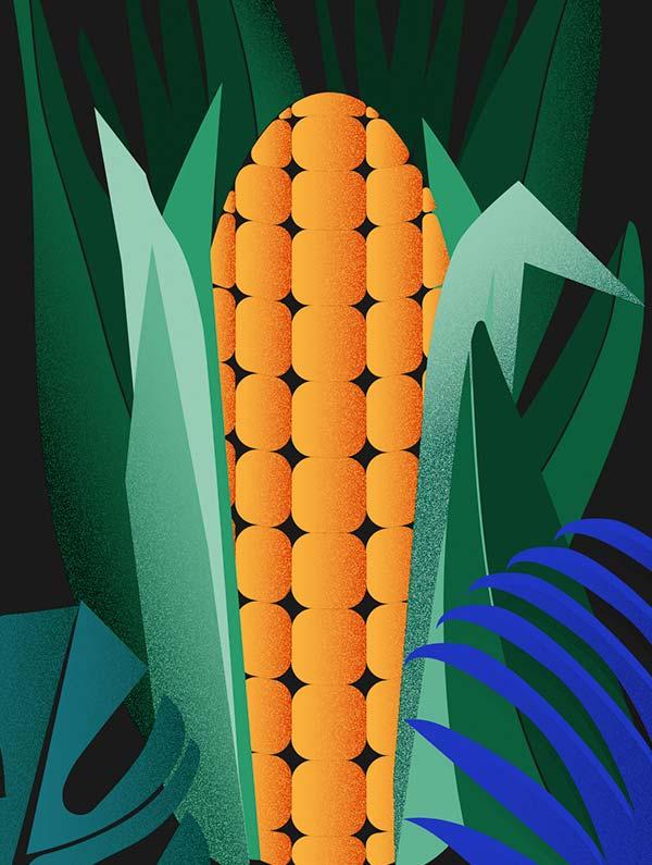 Breve historia del maiz